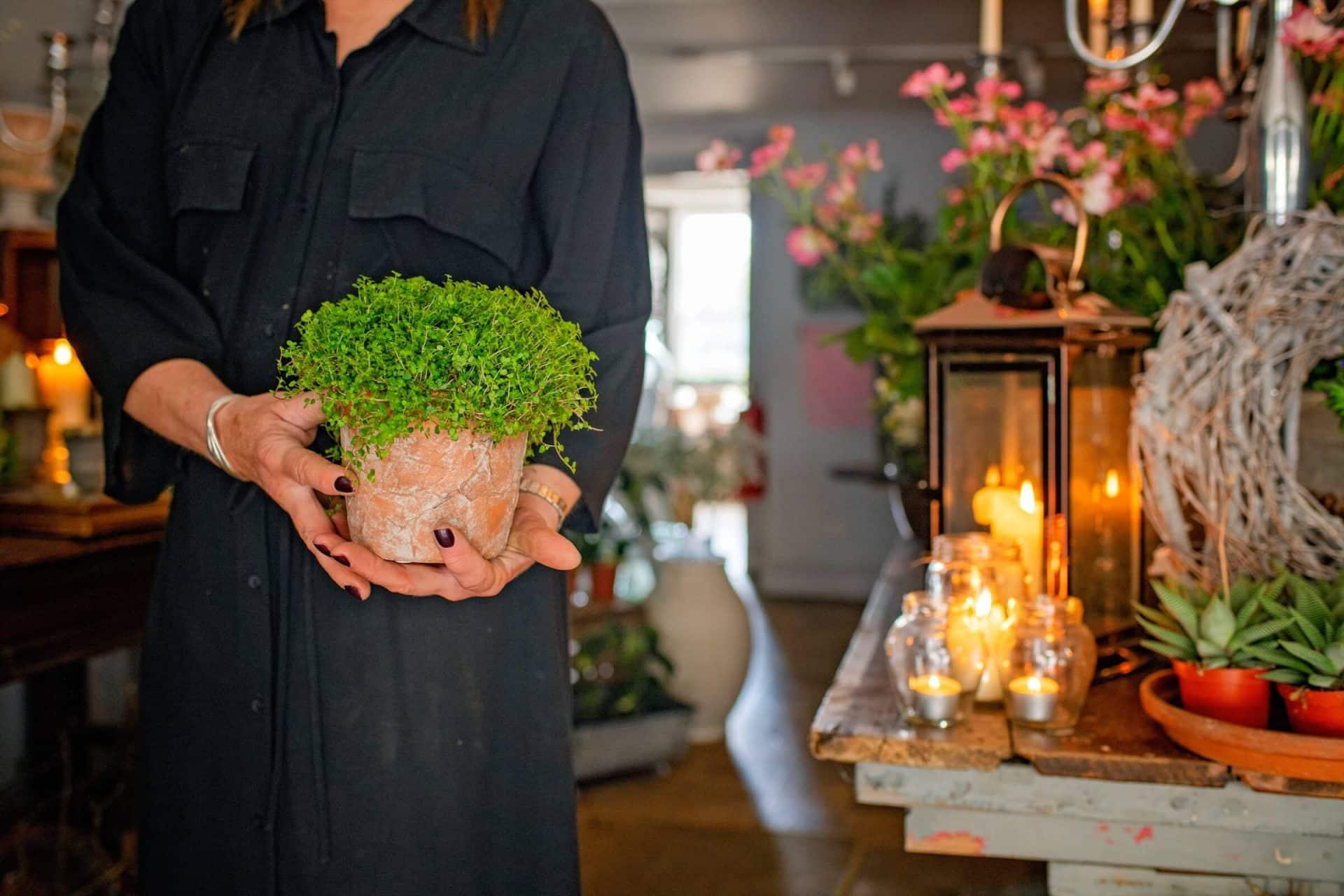 Florist holding green plant