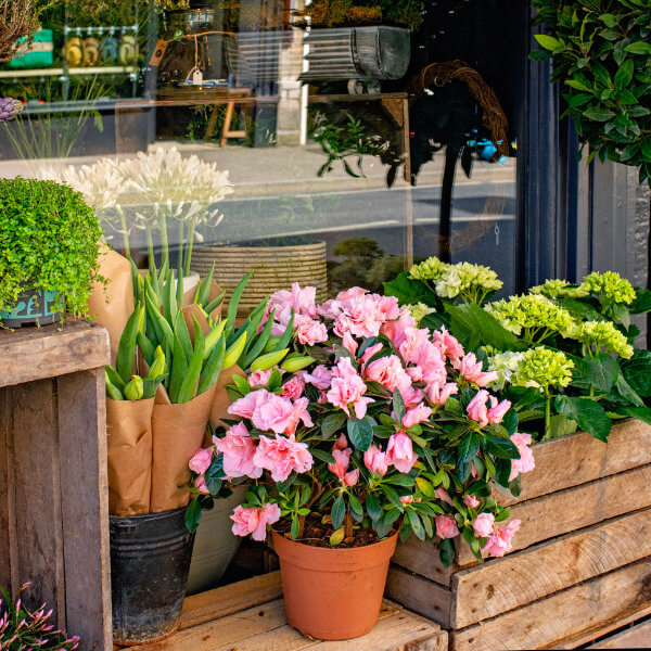 Flowers and gifts from Tetbury florist